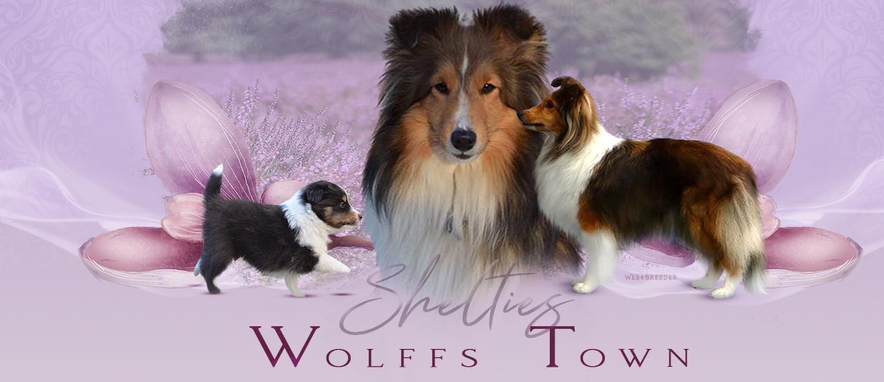 Sheltiezucht Wolffs Town | VDH | FCI